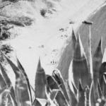 Baia di San Montano Ischia dall'alto - Archivio di Friburgo 1933