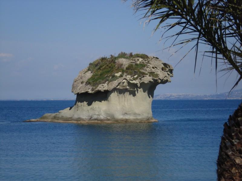 Foto Fungo Ischia Lacco Ameno
